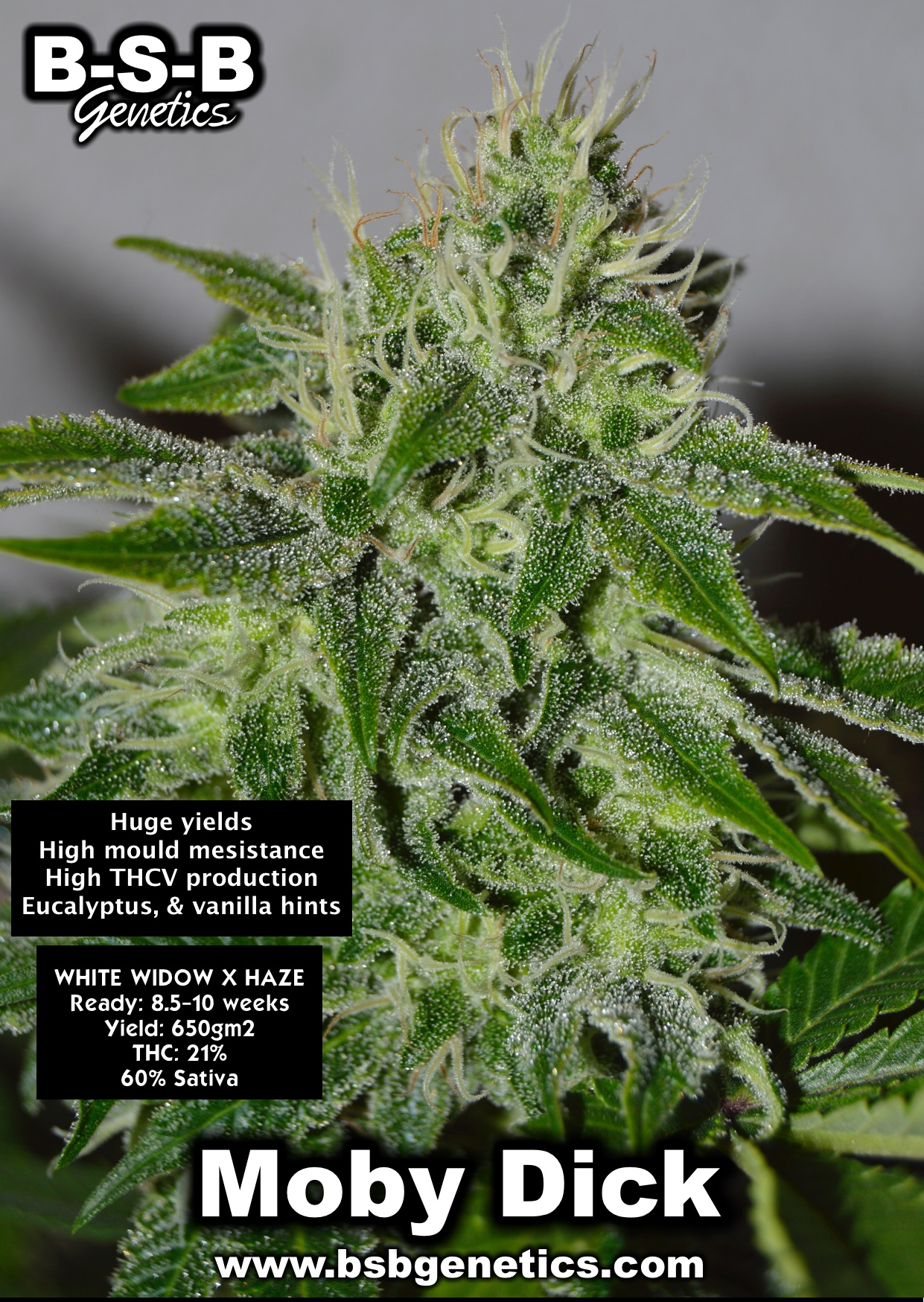 moby dick special